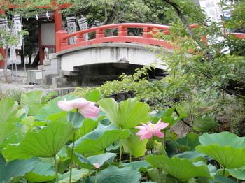 鶴岡八幡宮(源平池の蓮).jpg
